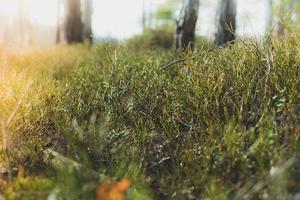 campo de hierba verde durante el día foto
