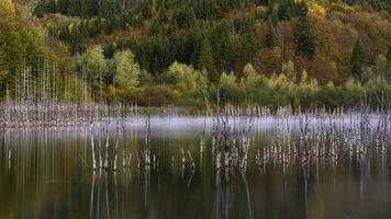 Reflexiones de árboles sobre el cuerpo de agua.