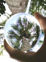 Crystal ball photography of green palm tree