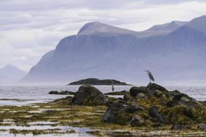 Two birds on a rocky shore during the day