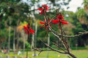 flores de pétalos rojos foto