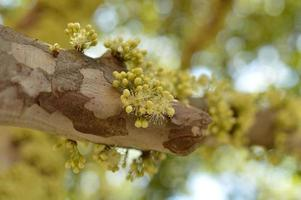Yellow petaled flowers on a tree branch