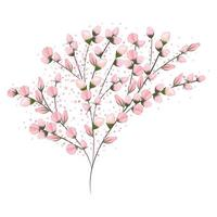Pink buds flowers bouquet painting vector
