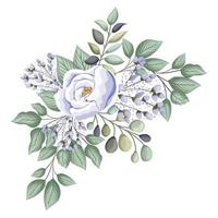 White rose flower with buds and leaves painting vector