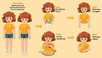 Funciones de los genes y el medio ambiente. grasa corporal en gemelos idénticos infografía. vector