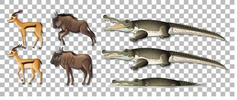 Conjunto de animales africanos salvajes aislados sobre fondo transparente