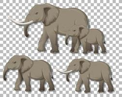 Set of isolated elephants on transparent background vector