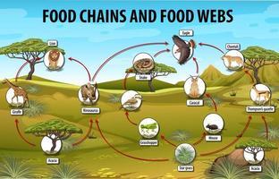 cartel educativo de biología para diagrama de cadenas alimentarias vector