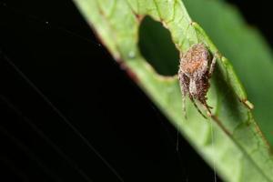 araña en una hoja