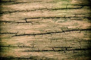 Close-up of a wood surface