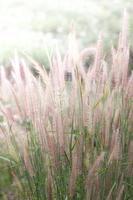 campo de hierba al atardecer