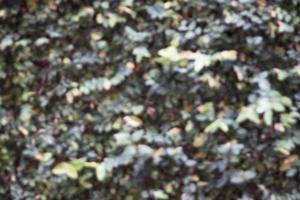 Blurry green leaf background