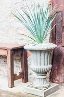 Concrete planter and plant