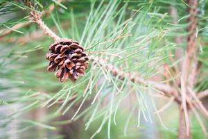 piña en un árbol foto