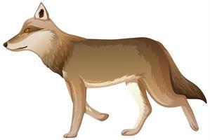 un lobo en estilo de dibujos animados aislado sobre fondo blanco