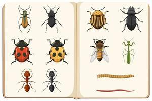 lista de entomología de la colección de insectos vector