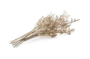 Dried caspia flowers