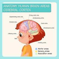 Anatomía áreas del cerebro humano corteza cerebral con etiqueta vector