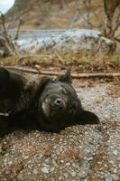 Black cute dog resting on the road