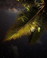 Low-angle photography of green coconut tree during night time
