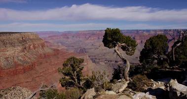 panoramica orizzontale colpo di un canyon rosso e alberi in primo piano in 4K