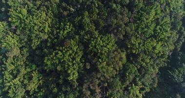 vista aérea del bosque en la montaña