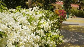 jardim egípcio de verão