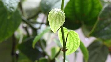 hojas verdes en un jardín en un día lluvioso