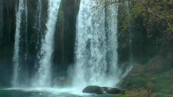 cascada y hábitat verde.