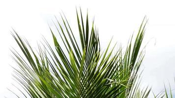 folhas de palmeira e vento video