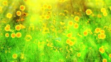flores de primavera verde y amarillo