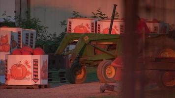 fazendeiro em empilhadeira levantando abóboras