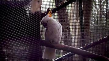cacatúa en cámara lenta de hábitat zoológico