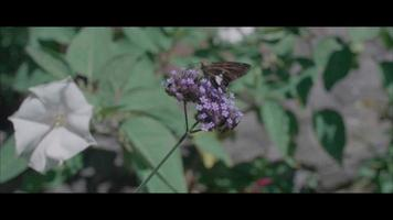 butterly slow motion video
