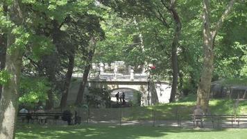 ponte no parque central 4k