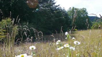 campo de flores silvestres video
