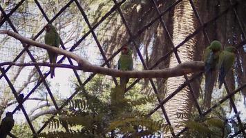Aras, die auf Ast im Zoolebensraum ruhen