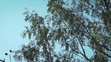 Äste vom Wind mit blauem Himmel bewegt