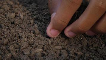 Hand pflanzt einen Samen auf den Boden