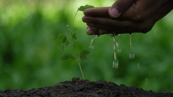 mano, regar, planta joven, árbol, en, suelo