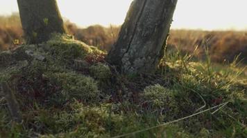 le soleil éblouissant entre les arbres et l'herbe