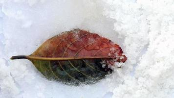 Old Brown Leaf in Ice