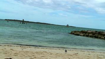 Calm ocean waves and a tropical bird