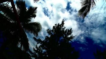 nubes blancas cielo azul y palmeras