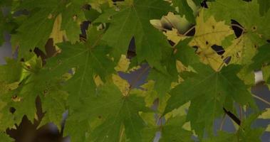 hermosa textura verde de hojas frescas y ramas en 4k