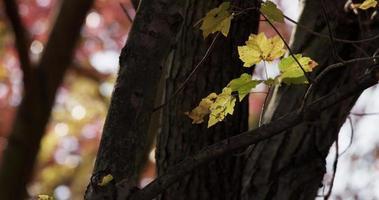 foto de baixo ângulo de pequenos galhos com folhas amarelas e árvores desfocadas no fundo em 4k