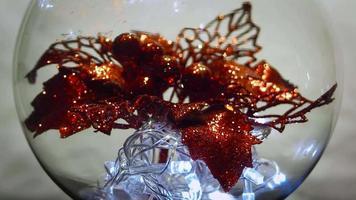 flor de navidad y luces