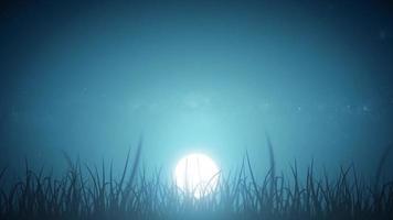 foglie di erba sul bellissimo ciclo del cielo notturno video