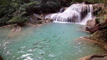 Erawan Wasserfall, Erawan Nationalpark in Kanchanaburi, Thailand video