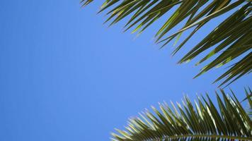 Green palm leaves flutter in wind against a blue sky